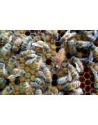 Marquer essaim d'abeille vers Bourgoin-Jallieu