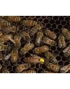 Elevage essaim d'abeille vers Bourgoin-Jallieu